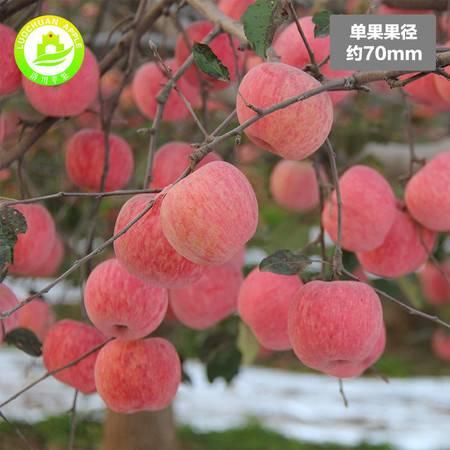 洛川新鲜苹果约10斤30枚70mm陕西苹果水果红富士苹果
