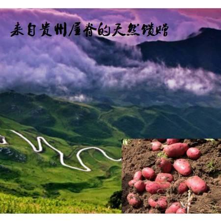 贵州屋脊红皮马铃薯
