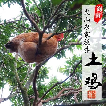 火山公社 海南火山农家放养母山鸡 海口同城配送 (2-3斤)