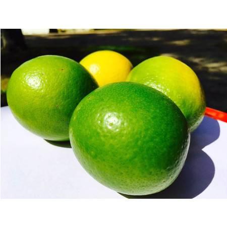 海南特产  定安黄竹富硒柠檬10斤  装