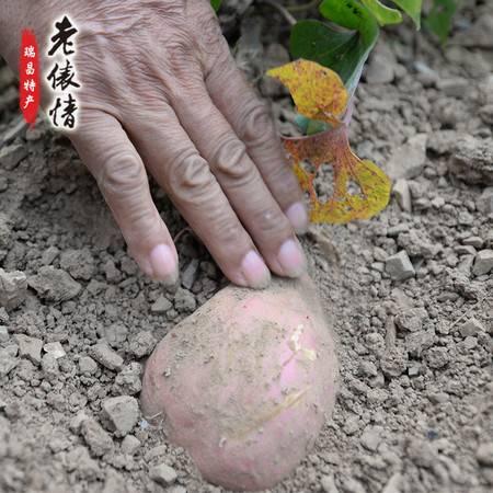 老俵情 瑞昌红薯5斤装农家新鲜红心甜红薯5斤红沙土香番薯
