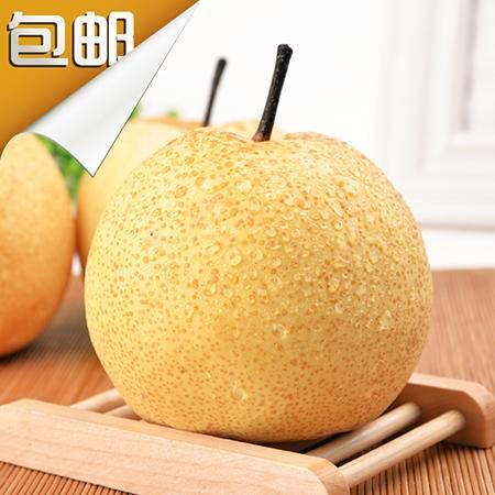 砀园 精品百年老树砀山酥梨9枚礼盒装单果重约300g