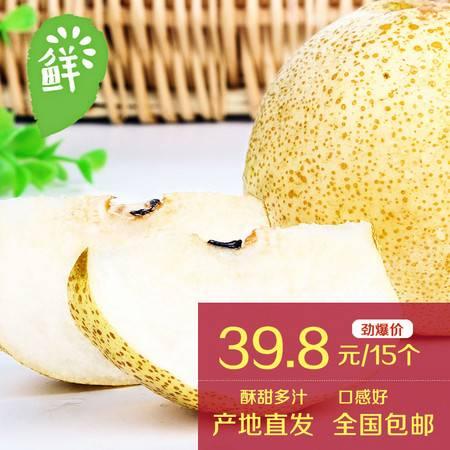 砀园 砀山酥梨14装全国包邮园艺场黄河故道产区