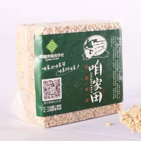 【咱家田】小麦仁  真空包装 500g