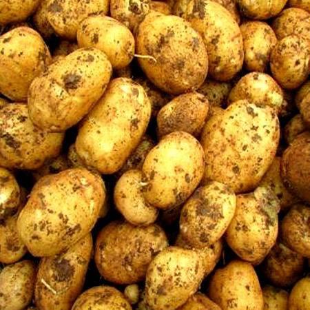 【恩施农品推荐】 富硒高山小土豆 绿色食品 5千克