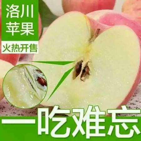 12枚陕西洛川水果红富士有机苹果不打蜡无催红无农药带皮吃