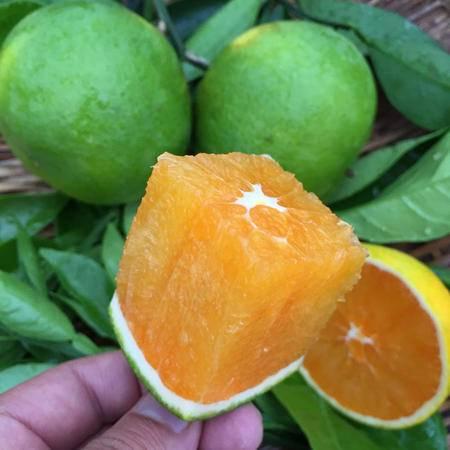 吉春现摘九月红橙子 秭归秋橙孕妇农家时令新鲜水果超手剥赣南脐橙8斤