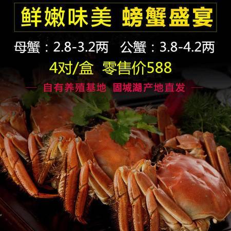 固城湖螃蟹