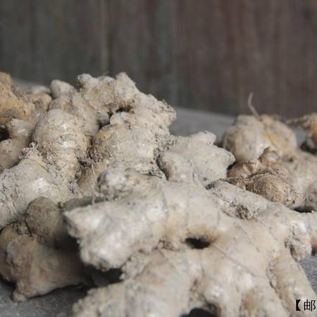 【一村一品】【老姜】助销景宁高山农家生态绿色生姜 2斤装12月6日统一发货