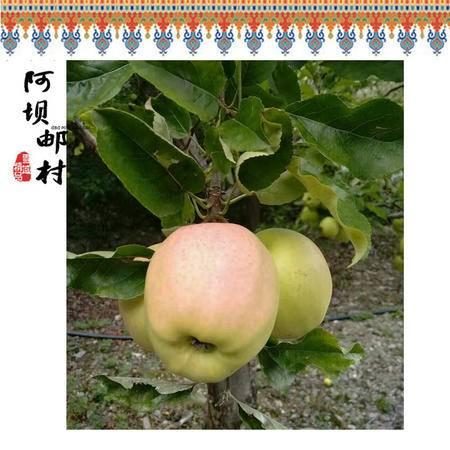 省外包邮2016正品包邮四川特产小金金冠青苹果新鲜纯天然水果黄元帅7斤15斤装