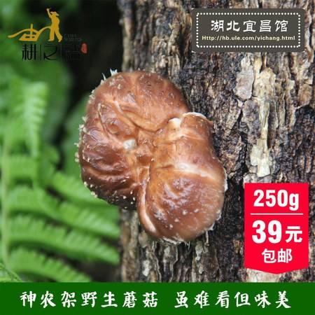三峡特产 耕之语 神农架椴木野生生态蘑菇干货250g克 自然生长房县新特级香