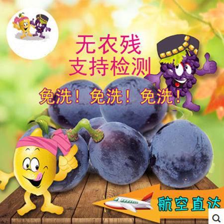 有机葡萄/天然无污染/中国长寿之乡