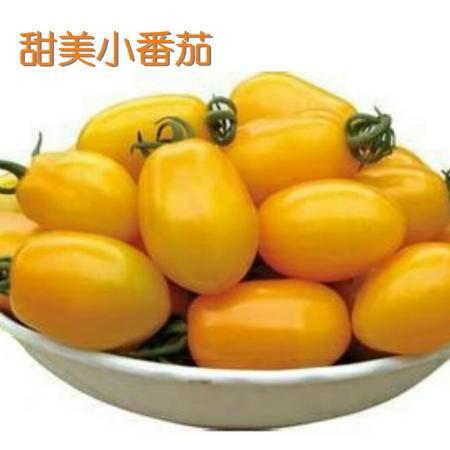 【河北特产】绿茜宝 新品  富硒甜美小番茄5.9元/斤 5斤包邮 挑拨您的味蕾~