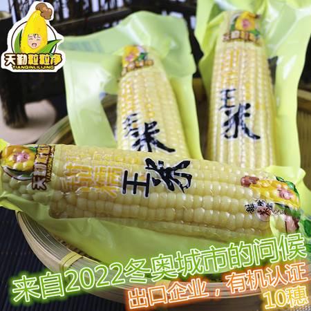 天勤粒粒净甜糯鲜玉米新鲜有机糯玉米棒非转基因甜黏玉米粘嫩