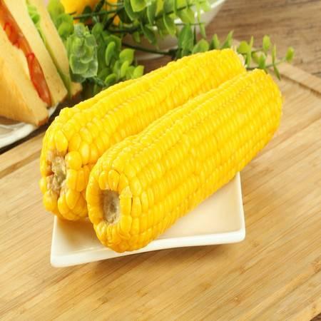 穗康鲜食玉米