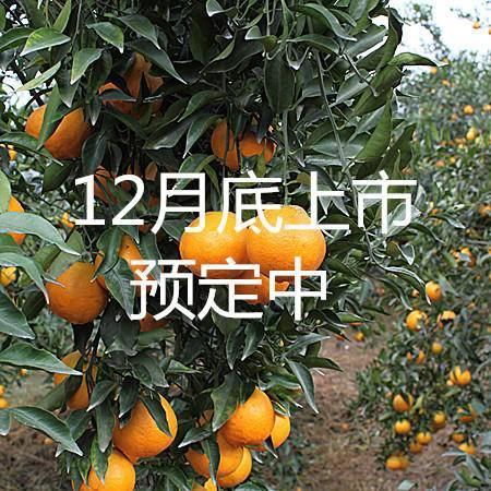 蒲江正宗春见(耙耙柑)大果90cm-120cm5斤包邮