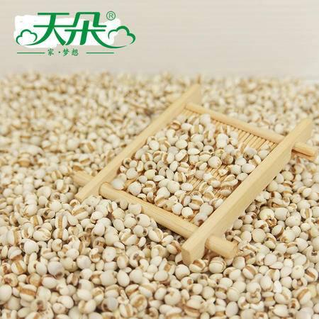 天朵 新鲜小粒薏米500gX4 五谷杂粮薏米薏仁米薏苡仁 杂粮礼盒