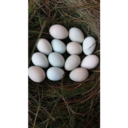 零无染 绿壳乌鸡蛋土鸡蛋大山散养乌鸡蛋