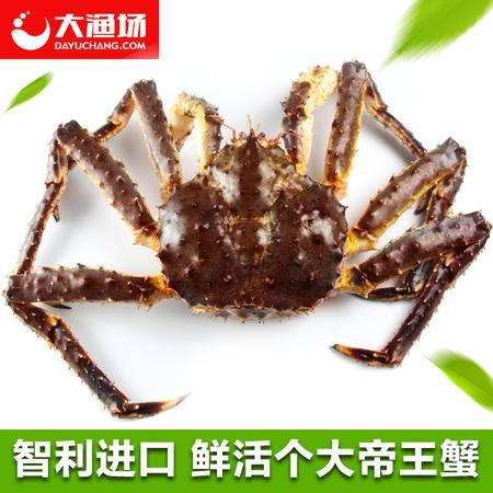 【大渔场】鲜活帝王蟹4 斤左右/只进口帝王蟹  深海蟹 鲜活发货
