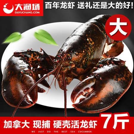 【大渔场】鲜活大龙虾3500g/只 波士顿大龙虾 鲜活 加拿大龙虾