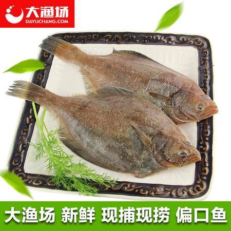 大连鲜活海鲜 新鲜大偏口鱼约2条/斤 鲽鱼 大比目鱼高眼鲽海产品