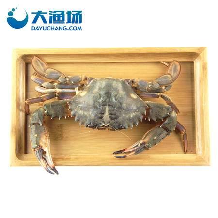 大连鲜活公飞蟹2-3只/斤 梭子蟹大连鲜活海蟹活螃蟹新鲜螃蟹