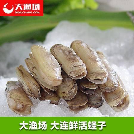 【大渔场】鲜活蛏子500g 大连水产鲜活大海贝 双头蛏子海蚬刀蚬