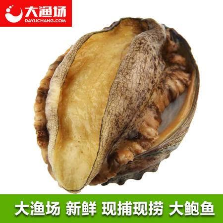 大连海鲜水产 活鲍鱼 鲜活新鲜大鲍鱼 6头/斤 按斤出售 烧烤