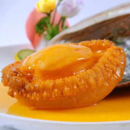 大连海鲜水产 活鲍鱼 鲜活新鲜大鲍鱼6头/斤 单只出售