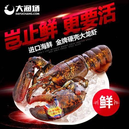 大渔场--加拿大进口鲜活波士顿龙虾 1只 海鲜水产 1.75kg/只