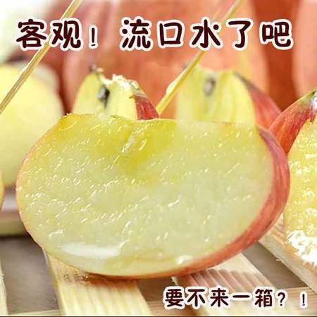 【邮乐濮阳】TQ 陕西红红富士苹果 洛川苹果 红富士苹果 没打蜡 甜度大 汁水多 10斤装