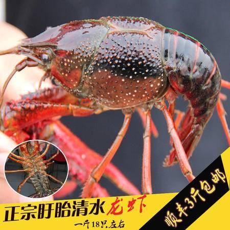 盱眙小龙虾鲜活虾批发野生活体新鲜肉质饱满四五六规格1斤装