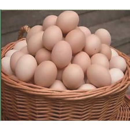成安牧业 山芋鸡 特级蛋(宝宝蛋)30枚 箱装  绿色健康