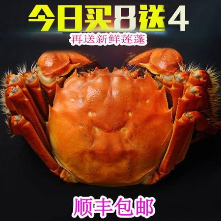 汈汊螺蛳湖大闸蟹鲜活现货新鲜螃蟹红膏大闸蟹全母2.4-2.0两六月黄大只河蟹团购