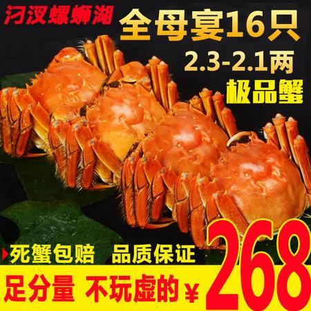 汈汊螺蛳湖大闸蟹鲜活现货新鲜螃蟹红膏大闸蟹公母2.3-2.7六月黄大只河蟹团购