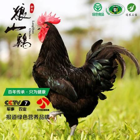 狼山 正宗江苏原生态散养狼山鸡放养土鸡现杀新鲜公鸡月子鸡鸡肉