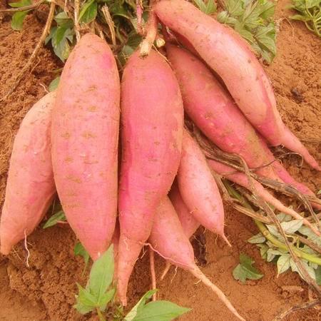 杞农云商新鲜红薯农家种植地瓜红番薯山芋2斤装新鲜黄心地瓜包邮