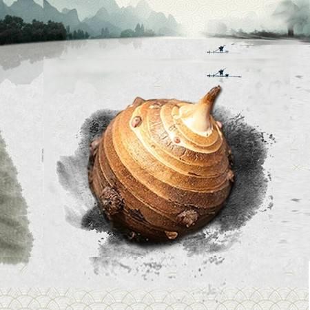 兴化龙香芋