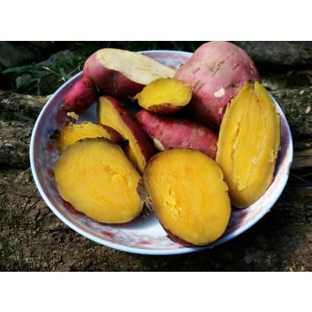 邮乐购 抚州黎川特产 红薯 500g