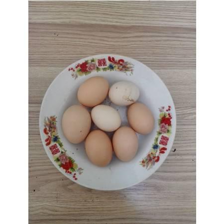 邮乐购 抚州临川特产 土鸡蛋 10个