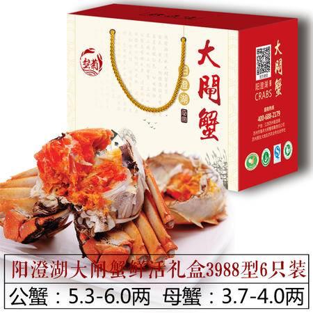 【螯菊】阳澄湖大闸蟹3988型6只装鲜活螃蟹礼盒(公5.3-6.0两、母3.7-4.0两)