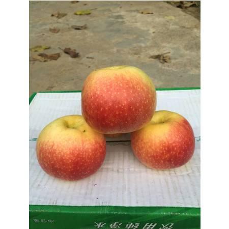 旺园 牌苹果