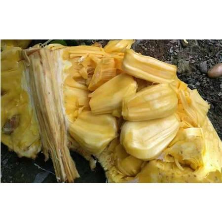 黎安双帆石 菠萝蜜