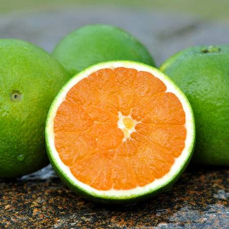 预卖 新鲜采摘九月红秋橙  湖北秭归脐橙橙子酸甜多汁 橙子5斤