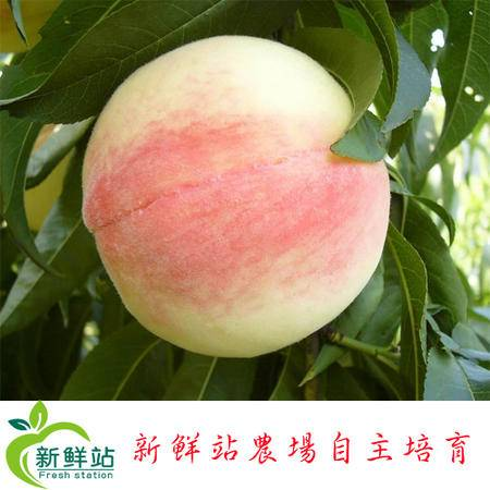 【新鲜站】甜心蜜桃现摘现发 6斤装
