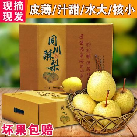 果园现摘梨子新鲜水果梨青梨砀山酥梨 同川酥梨雪梨皇冠梨礼盒装
