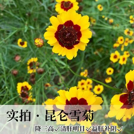 【昆仑雪菊25g】广志牌天然昆仑雪菊菊花茶罐装包邮