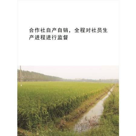 农佳汇2016虾稻有机稻米预售   新米10斤省外包邮