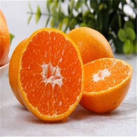 武当蜜桔 丹江口桔子新鲜水果橘子现摘薄皮黄柑桔单果重100g买3斤送2斤包邮
