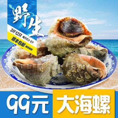 鲜活大海螺新鲜野生海螺大连海鲜水产贝类当天捕当天发其他
